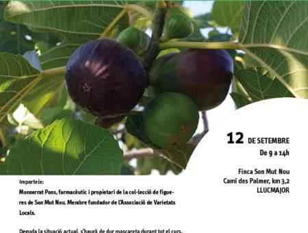 """Curs """"La figuera. El seu cultiu i les varietats locals"""""""