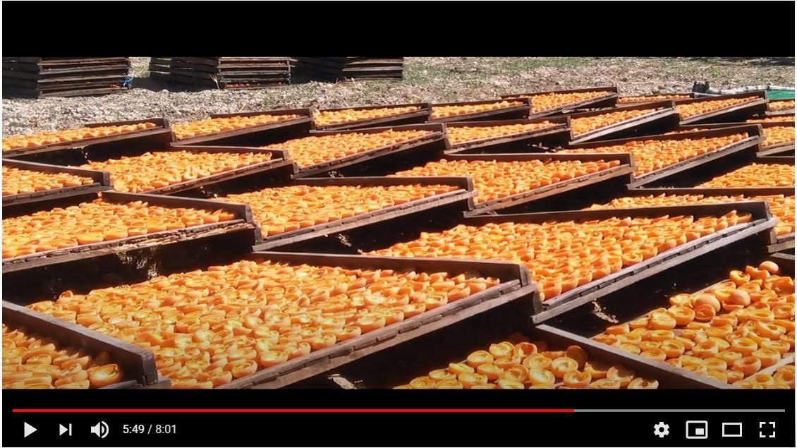 Captura vídeo albercoc 2
