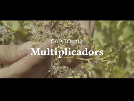Vídeos divulgació. Capítol 02: Multiplicadors