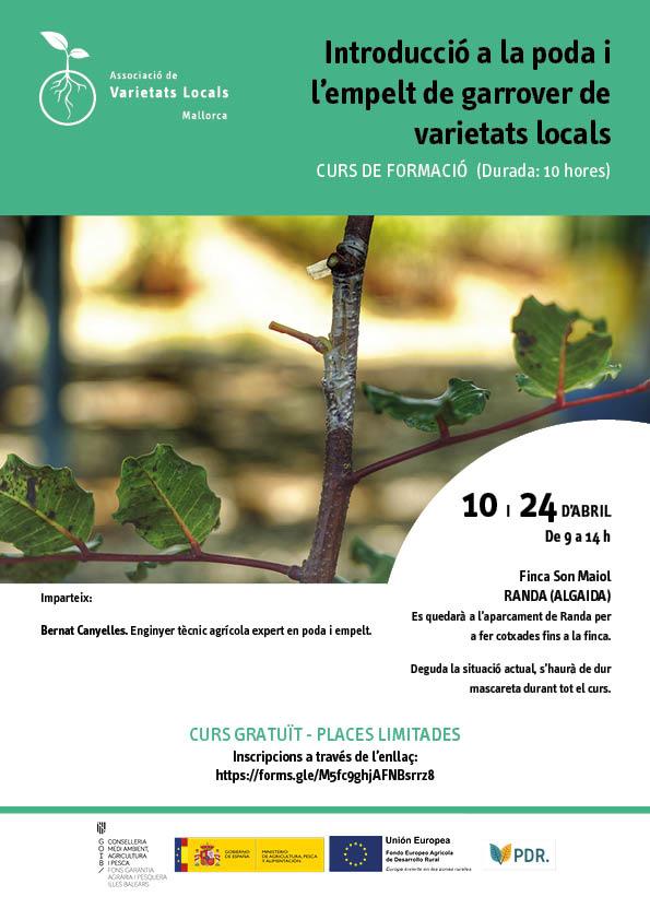 Introducció a la poda i l'empelt de garrover de varietats locals