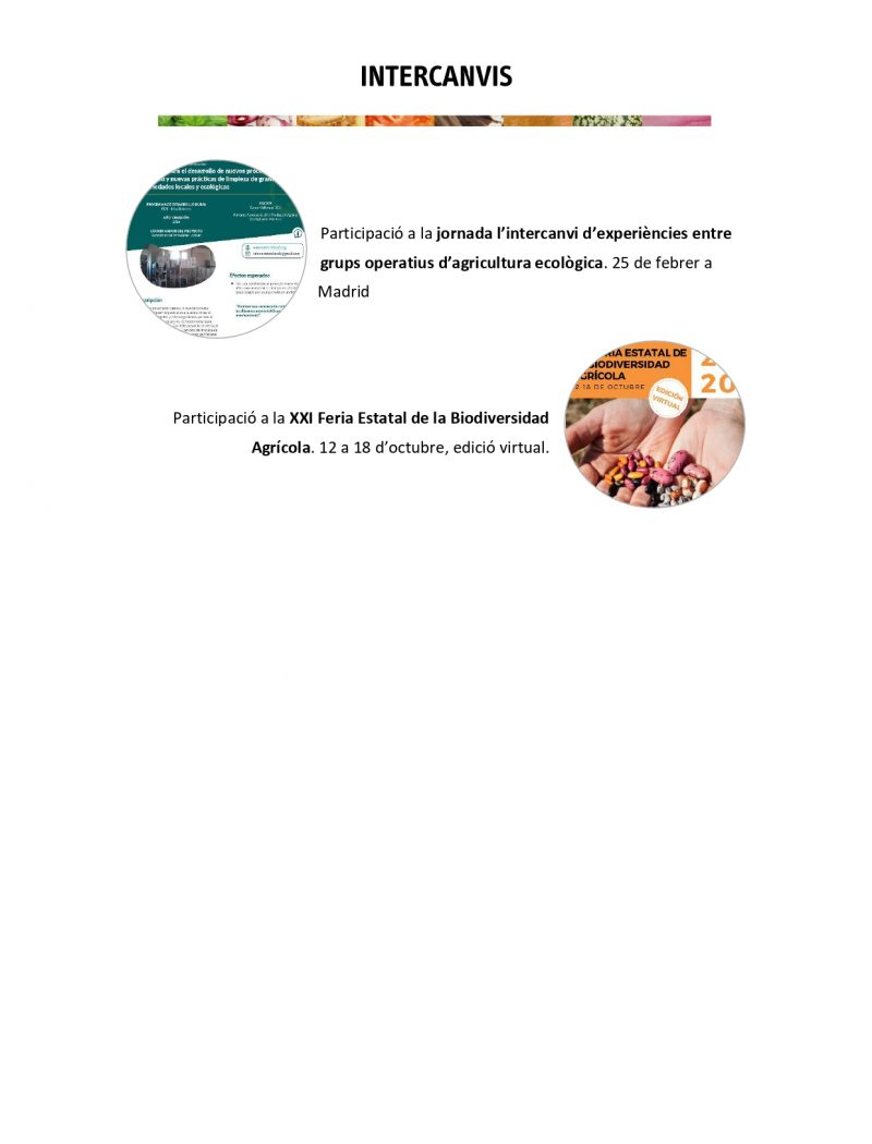 Memòria anual AVL 2020 per difusió_pages-to-jpg-0008