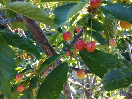 """Formulari """"Existència i demanda de fruiters de varietats locals"""""""