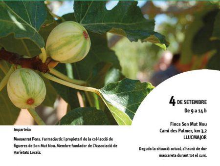 """Curs """"La figuera. Cultiu i varietats locals"""""""