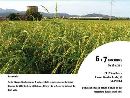 """Curs """"Cultiu i varietats de l'arròs al Delta de l'Ebre: 20 anys d'experiència de Riet Vell"""""""